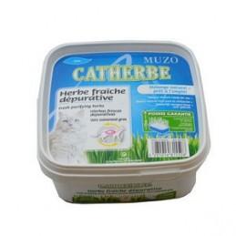 Girard Catherbe herbes fraiches dépuratives