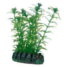 Hobby plante Lagarosiphon HOBBY  Décoration