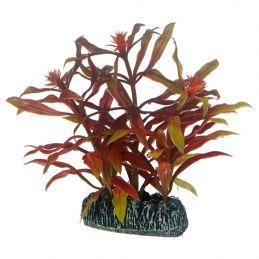 Hobby plante Nesaea HOBBY  Décoration