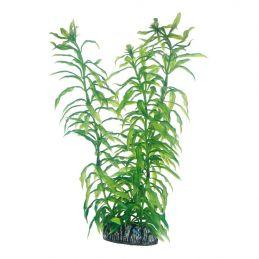 Hobby plante Heteranthera HOBBY  Décoration