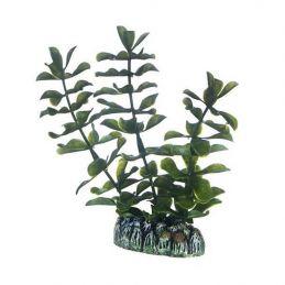 Hobby plante Bacopa HOBBY  Décoration
