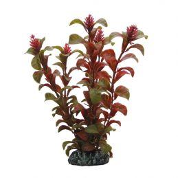 Hobby plante Rotala HOBBY  Décoration