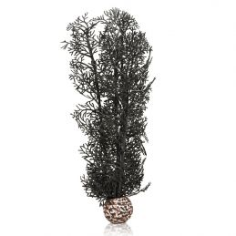 Oase Corail noir OASE  Plantes