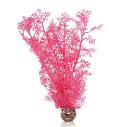 Oase Corail rose OASE  Plantes