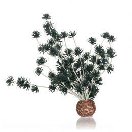 Oase Boule de bonsai OASE  Plantes