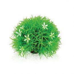 Oase plante boule OASE  Plantes