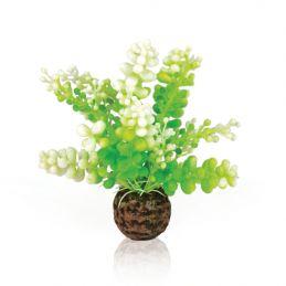 Oase plante Caulerpe OASE 822728007334 Plantes