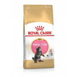 Croquettes Royal Canin Kitten Main Coon ROYAL CANIN  Croquettes Royal Canin