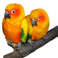 Cage pour Oiseaux Exotiques -  Cage pour votre oiseau