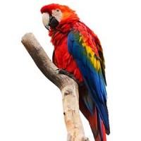 Cage Grande Perruche : Cage pour votre oiseau