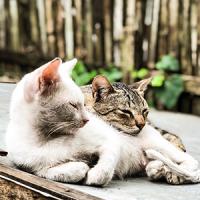 Accessoires et nourriture pour chat - L' Exotus tout pour votre chat