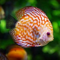 Matériel d'aquariophilie - Tout pour vos poissons