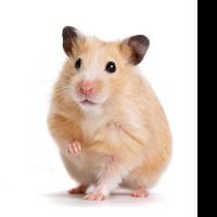 Materiel Hamster : Animalerie L'exotus