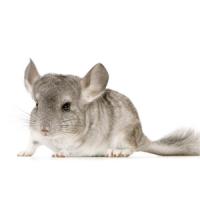 Tout Pour Le Rat : L'exotus