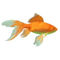 Nourriture Pour Poisson Rouge : Equipement aquariophilie L'exotus