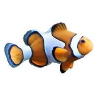 Accessoire Eau de Mer : Nourriture Poisson Eau de Mer