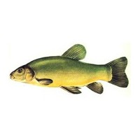 Pêche Anglaise Feeder - L'exotus