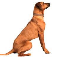 Dressage et éducation du chien : Magasin L'exotus