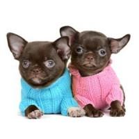 Vêtements pour chiens - L'exotus