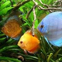 Ferplast Aquarium : Pièce Détachée - L'exotus