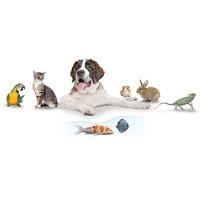 Ferplast Animalerie : Pièces détachées - L'exotus