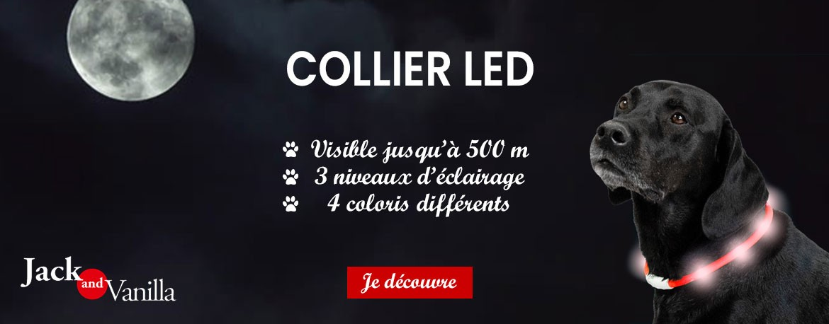 Collier LED Jack and Vanilla : L'Exotus